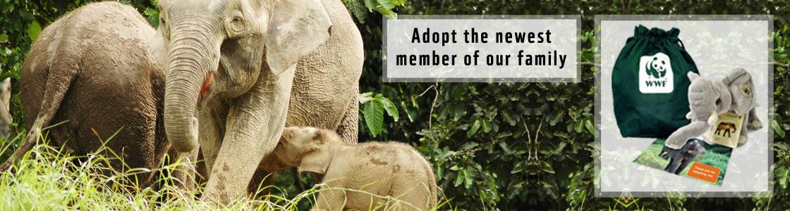 Banner---elephant-adoption_vr